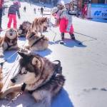 Huskies1b